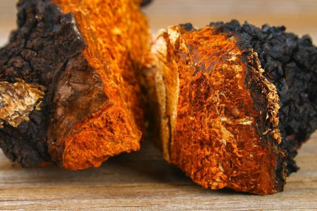 Chaga is another one of the adaptogenic mushrooms we use in our wellness tinctures.